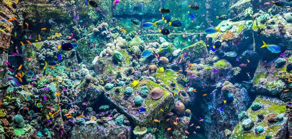 Aquarium poissons tropicaux photo Dubaï eau Photo stock © bloodua