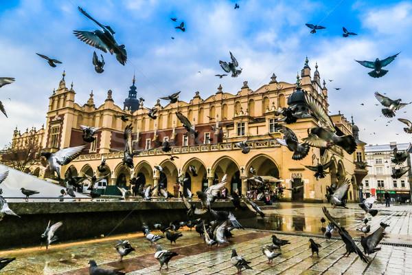 Galambfélék Krakkó öreg város piac tér Stock fotó © bloodua