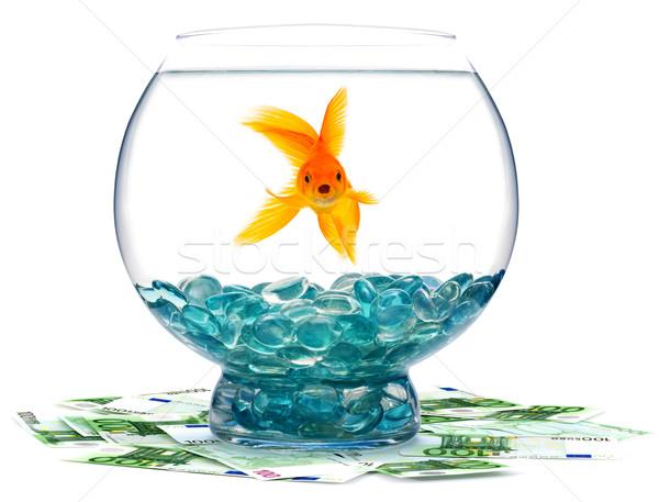Akvaryum balığı akvaryum beyaz su balık altın Stok fotoğraf © bloodua