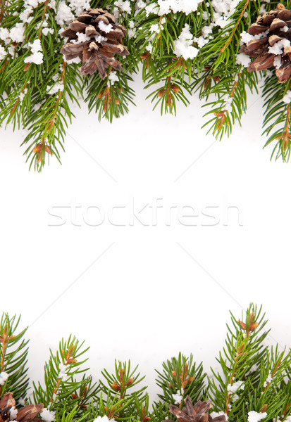 Christmas framework with snow and cones Stock photo © bloodua