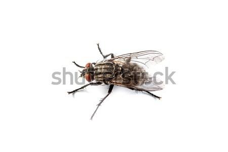 Vliegen geïsoleerd witte macro shot oog Stockfoto © bloodua