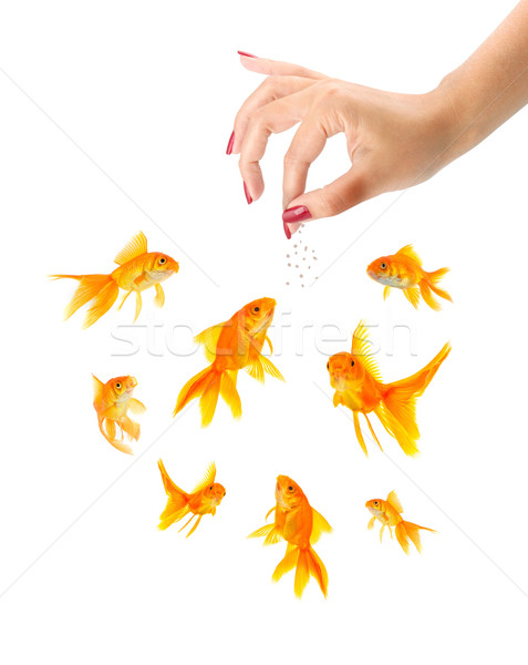 Woman feeding goldfishes Stock photo © bloodua