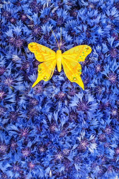 Wiosną niebieski chaber żółty Motyl wiosennych kwiatów Zdjęcia stock © bloodua