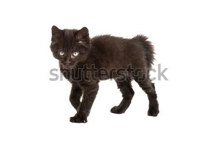 Sevimli siyah kedi yavrusu beyaz küçük yalıtılmış Stok fotoğraf © bloodua
