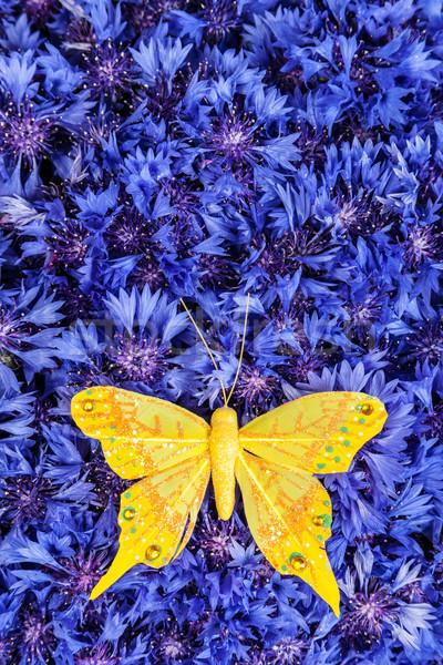 весны синий василек желтый бабочка весенние цветы Сток-фото © bloodua