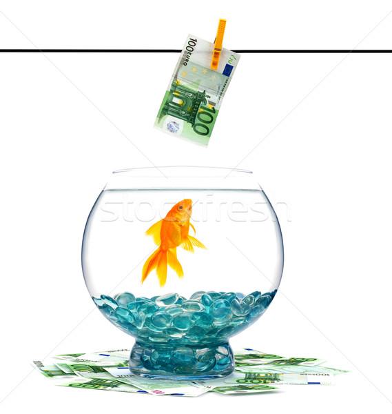 Goldfisch Aquarium weiß Wasser Fisch Gold Stock foto © bloodua