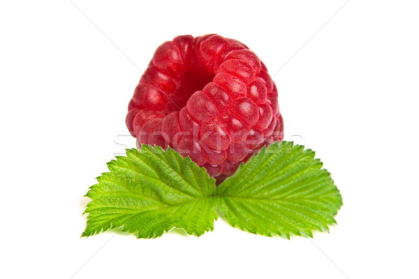Ripe rasberry with green leaf isolated over white. Close up macr Stock photo © bloodua