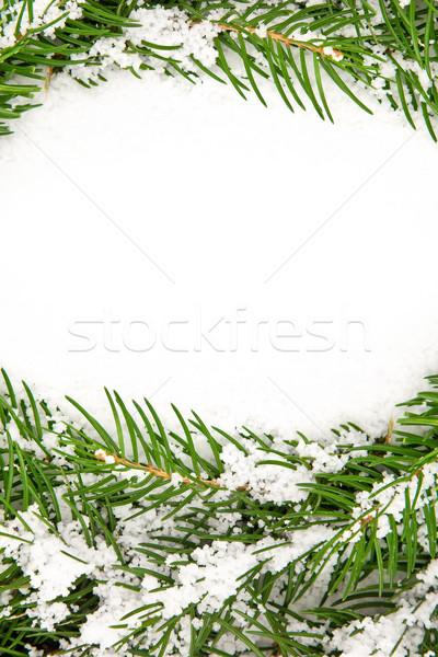 Karácsony váz hó izolált fehér fa Stock fotó © bloodua