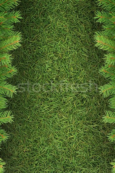 Christmas struktura zielone odizolowany roślin biały Zdjęcia stock © bloodua