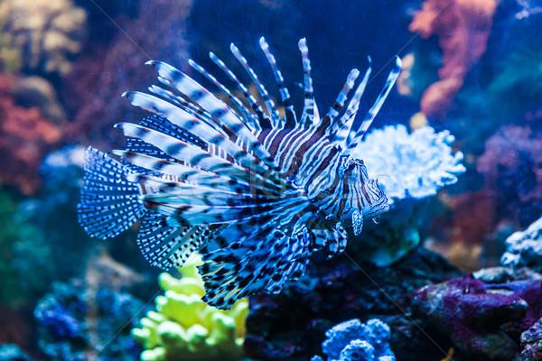 Photo stock: Vue · venimeux · rouge · Dubaï · aquarium