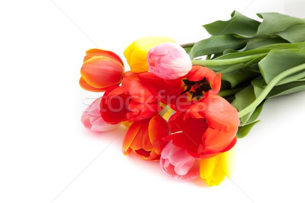 Bunch of tulips Stock photo © bloodua