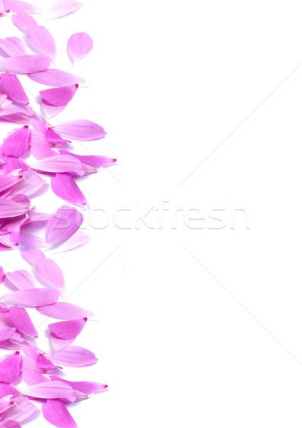 Virágok levelek izolált fehér virág természet Stock fotó © bloodua