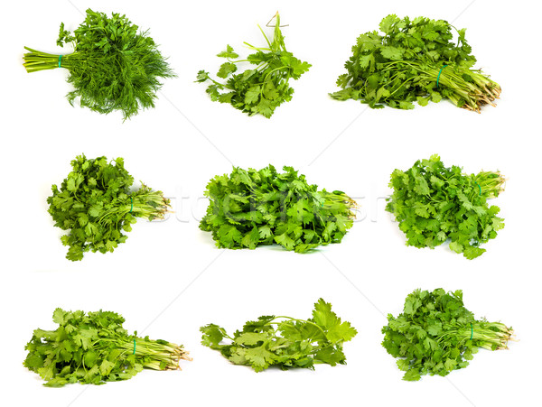 set of Fresh branches of green dill and Parsley tied isolated Stock photo © bloodua