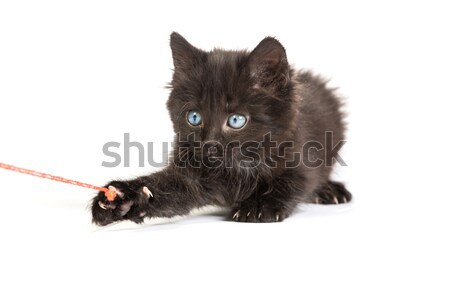 Frightened black kitten standing on a white background Stock photo © bloodua