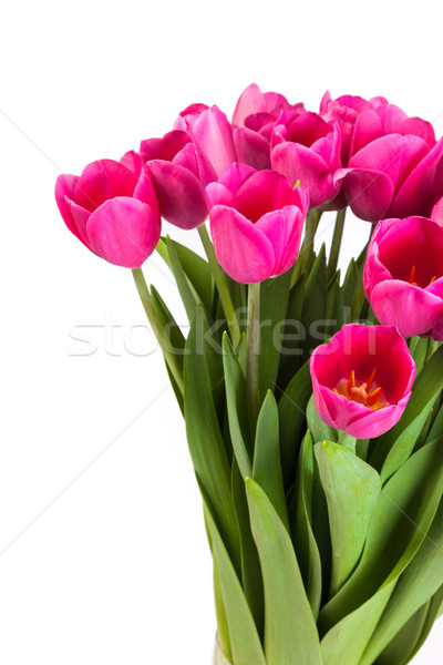 Bunch of tulips on a white Stock photo © bloodua