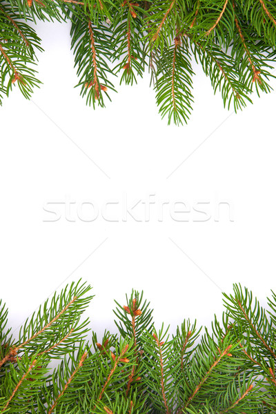 Christmas green  framework Stock photo © bloodua
