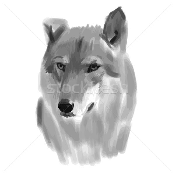 Vector boceto lobo cara ojos pluma Foto stock © blotty
