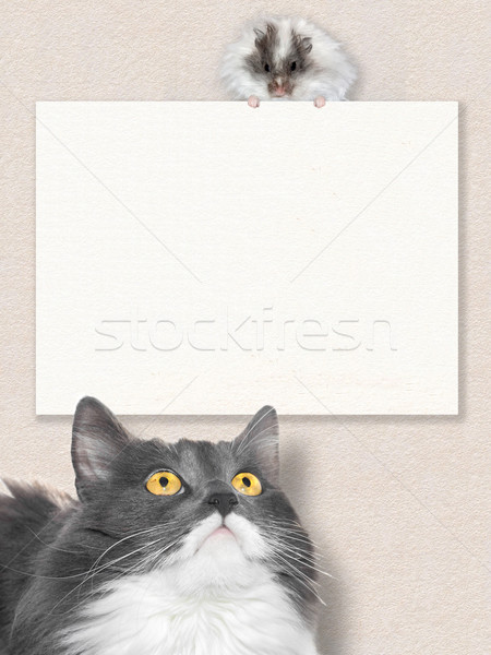 Grey cat look on white hamster Stock photo © blotty