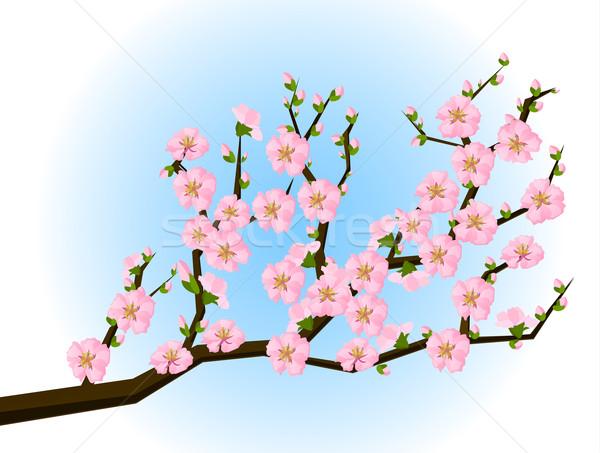 Stock fotó: Távolkeleti · stílus · festmény · cseresznyevirág · tavasz · virágok