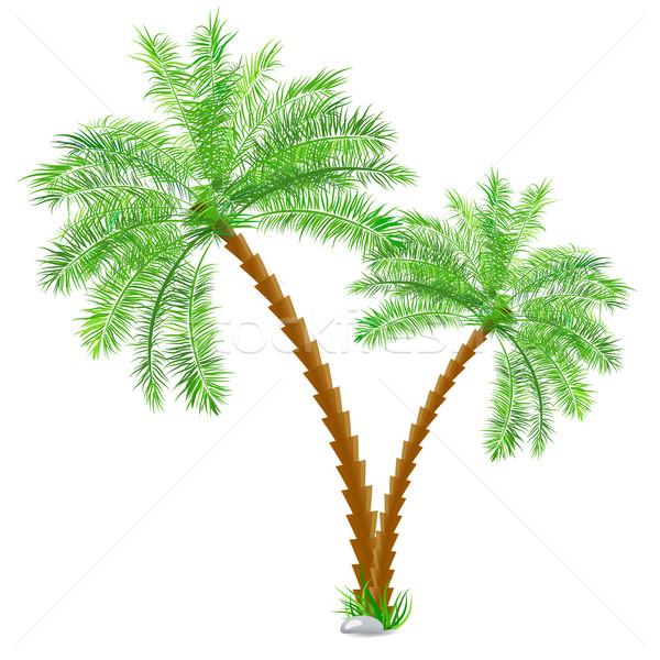 тропические пальма белый вектора бумаги дерево Сток-фото © blotty