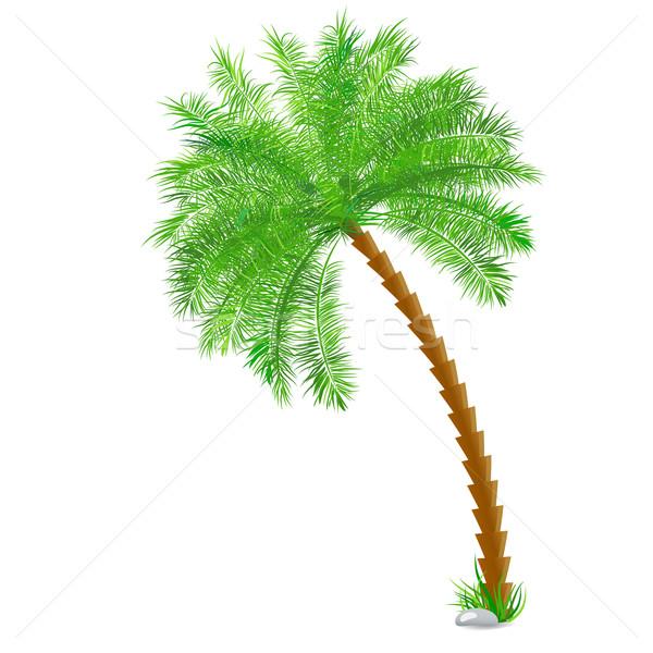 Tropical palmeira branco vetor papel árvore Foto stock © blotty