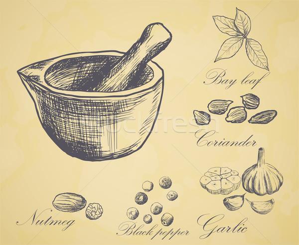 Dibujado a mano establecer orgánico especias naturaleza hoja Foto stock © blotty