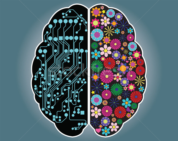 Left and right side of the brain, logic and creativity, vector Stock photo © BlueLela