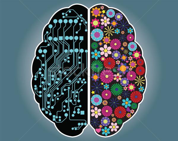 Helyes oldal agy logika kreativitás vektor Stock fotó © BlueLela