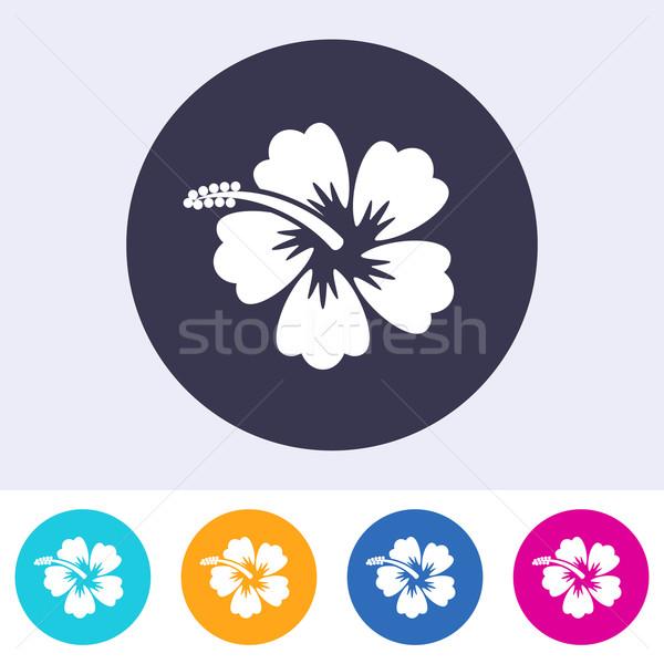 Vecteur hibiscus fleur icône coloré boutons Photo stock © blumer1979