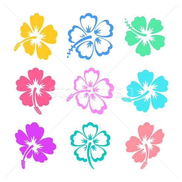 Stok fotoğraf: Renkli · vektör · ebegümeci · simgeler · siluet · beyaz
