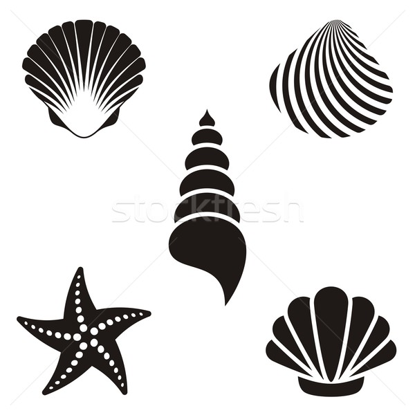 Deniz kabukları ayarlamak siyah denizyıldızı Stok fotoğraf © blumer1979