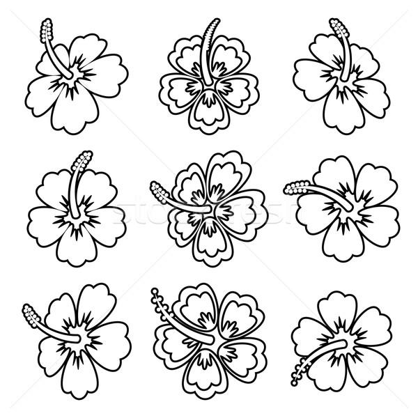 Stok fotoğraf: Vektör · ebegümeci · çiçek · simgeler · siyah