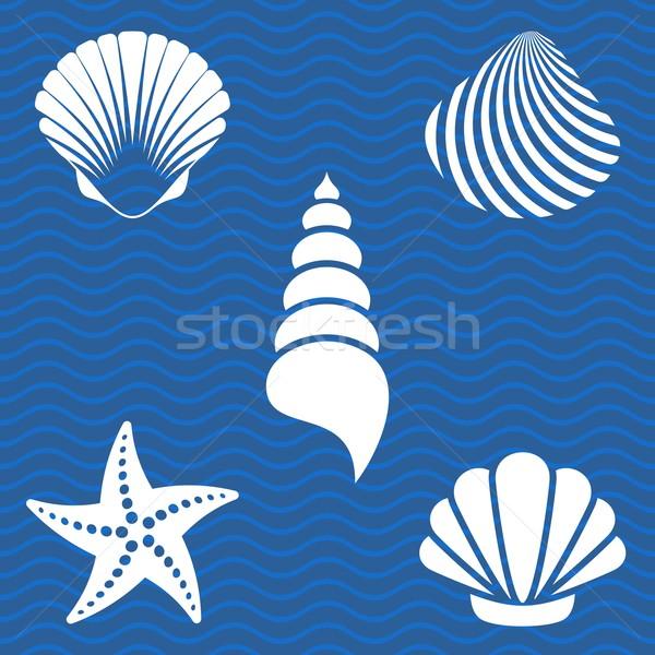 Sea shells Stock photo © blumer1979