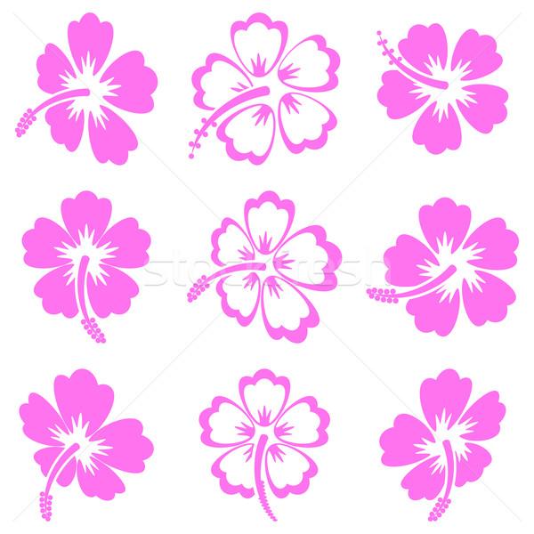 Vector hibisco silueta iconos rosa blanco Foto stock © blumer1979