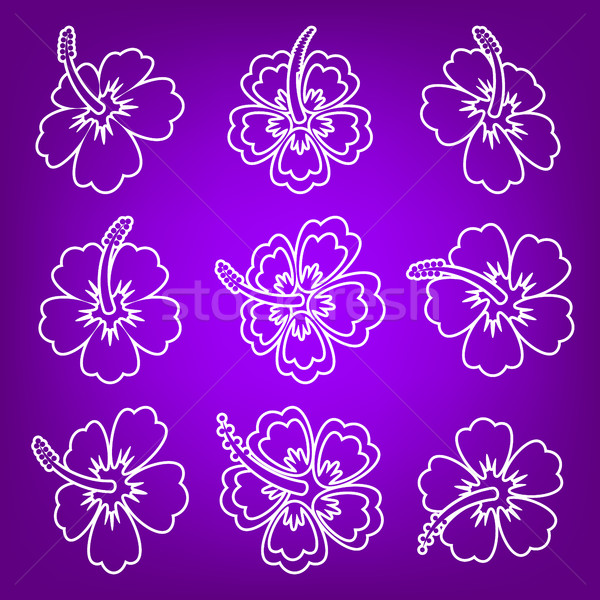Blanche vecteur hibiscus fleur icônes Photo stock © blumer1979