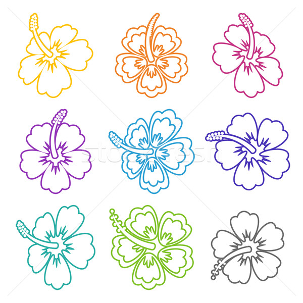 Vektor hibiszkusz virág skicc ikonok színes Stock fotó © blumer1979