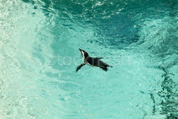 Foto stock: Pinguim · aquário · água · natação · fotografia · ao · ar · livre