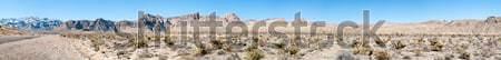 サボテン 砂漠 死 谷 公園 カリフォルニア ストックフォト © bmonteny