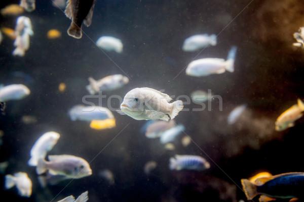 рыбы аквариум воды животного фотографии улице Сток-фото © bmonteny