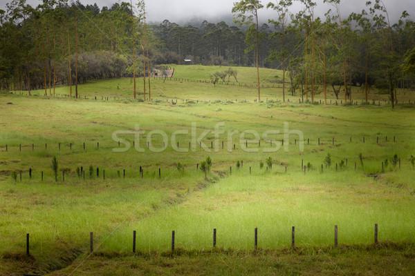 Vista campo Costa Rica árbol hierba Foto stock © bmonteny