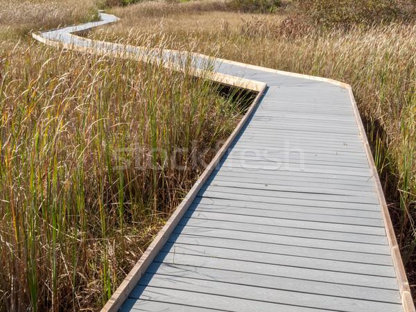 Boardwalk through marsh reeds Stock photo © bmonteny