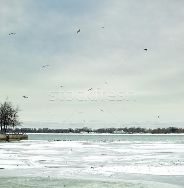 Birds flying over a frozen sea, Orangeville, Dufferin County, On Stock photo © bmonteny