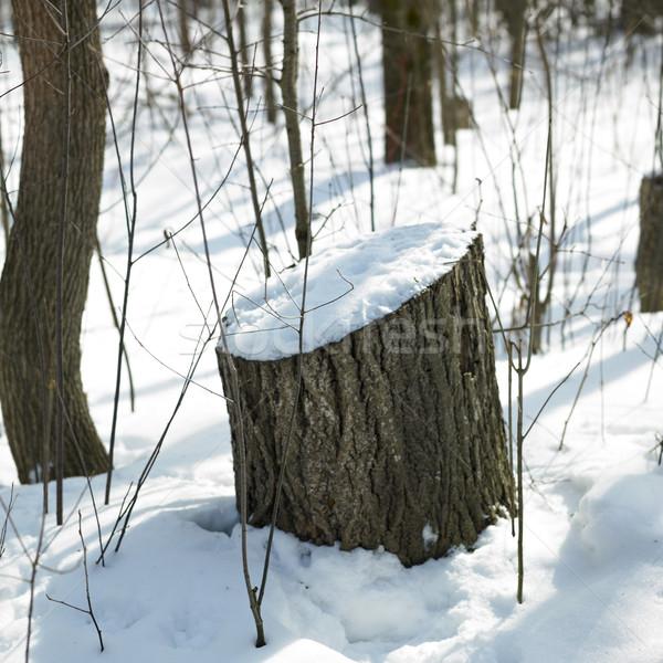 Neve coperto albero ontario Canada natura Foto d'archivio © bmonteny