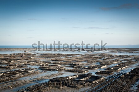 Oyster bed on the beach, Cote D'Emeraude, Cancale, Ille-Et-Vilai Stock photo © bmonteny