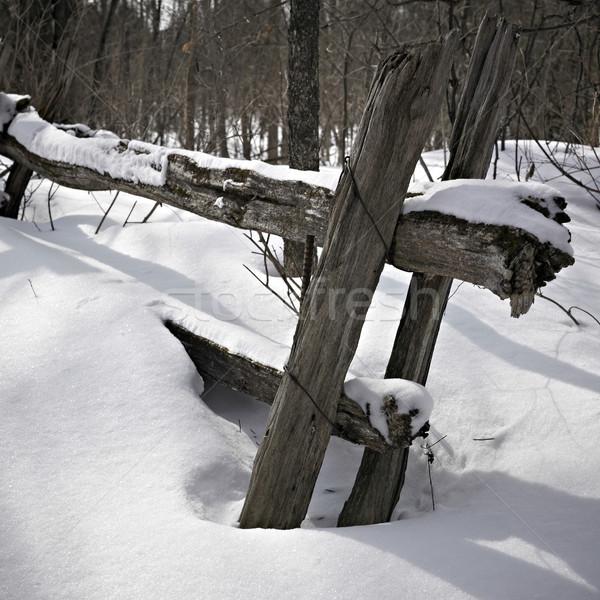 Hó fedett fából készült Ontario Kanada fa Stock fotó © bmonteny