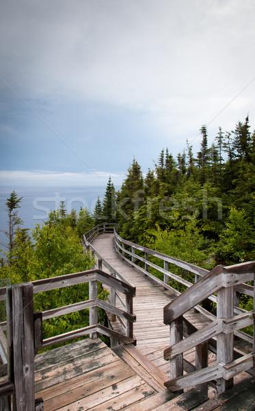 Sahil Quebec Kanada ağaç orman doğa Stok fotoğraf © bmonteny