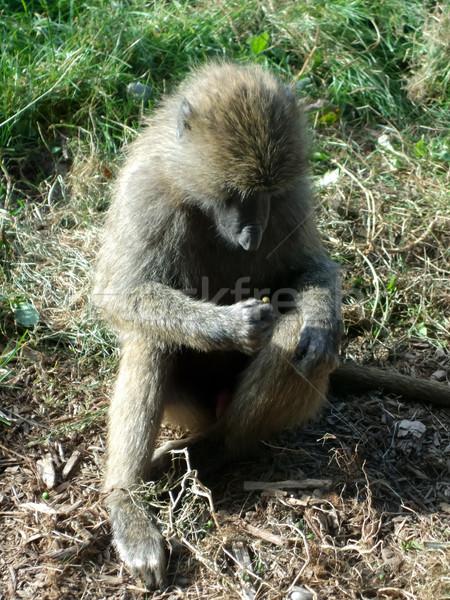 Macaco floresta sessão fotografia ao ar livre Foto stock © bmonteny