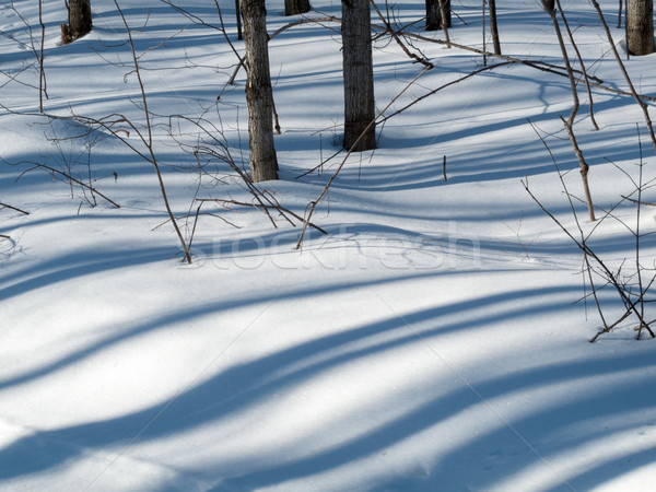 Trees in a snow covered landscape, Orangeville, Dufferin County, Stock photo © bmonteny