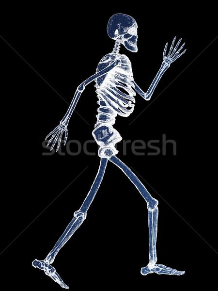 X-Ray of Full Human Skeleton Illustration Stock photo © bobbigmac