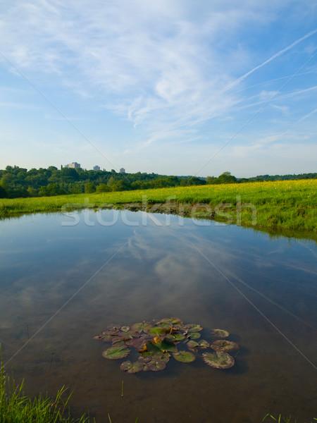 Pequeño estanque Inglés campo agua flores Foto stock © bobbigmac
